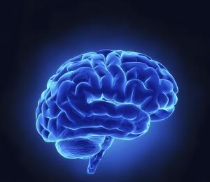 为什么我们看到跨语言的相似之处?人脑可能是负责任的