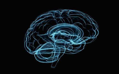大脑在童年时代奠定了推理的基础