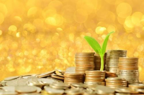 政策简报中强调金融教育对高校融资行为的影响