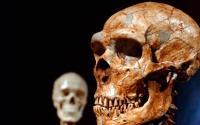 研究表明只有7%的DNA是现代人独有的
