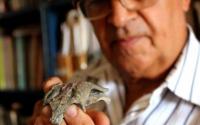 研究人员在智利化石中发现现代鳄鱼的祖父